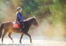 Call for children to wear helmets around horses