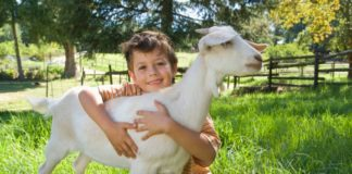 Boy hugging a goat on a lovely field of green.