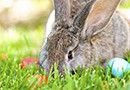 easter-bunny-eggs-featured-130×90